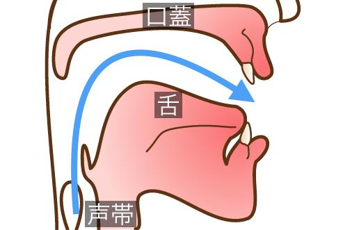 矯正治療中は舌の位置が変わる