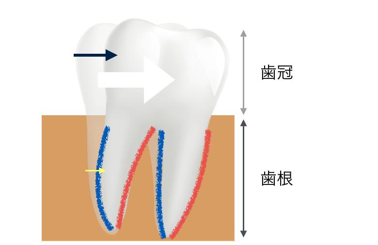 歯の動き方