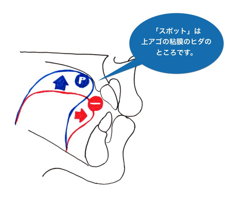 舌を置くスポットの位置